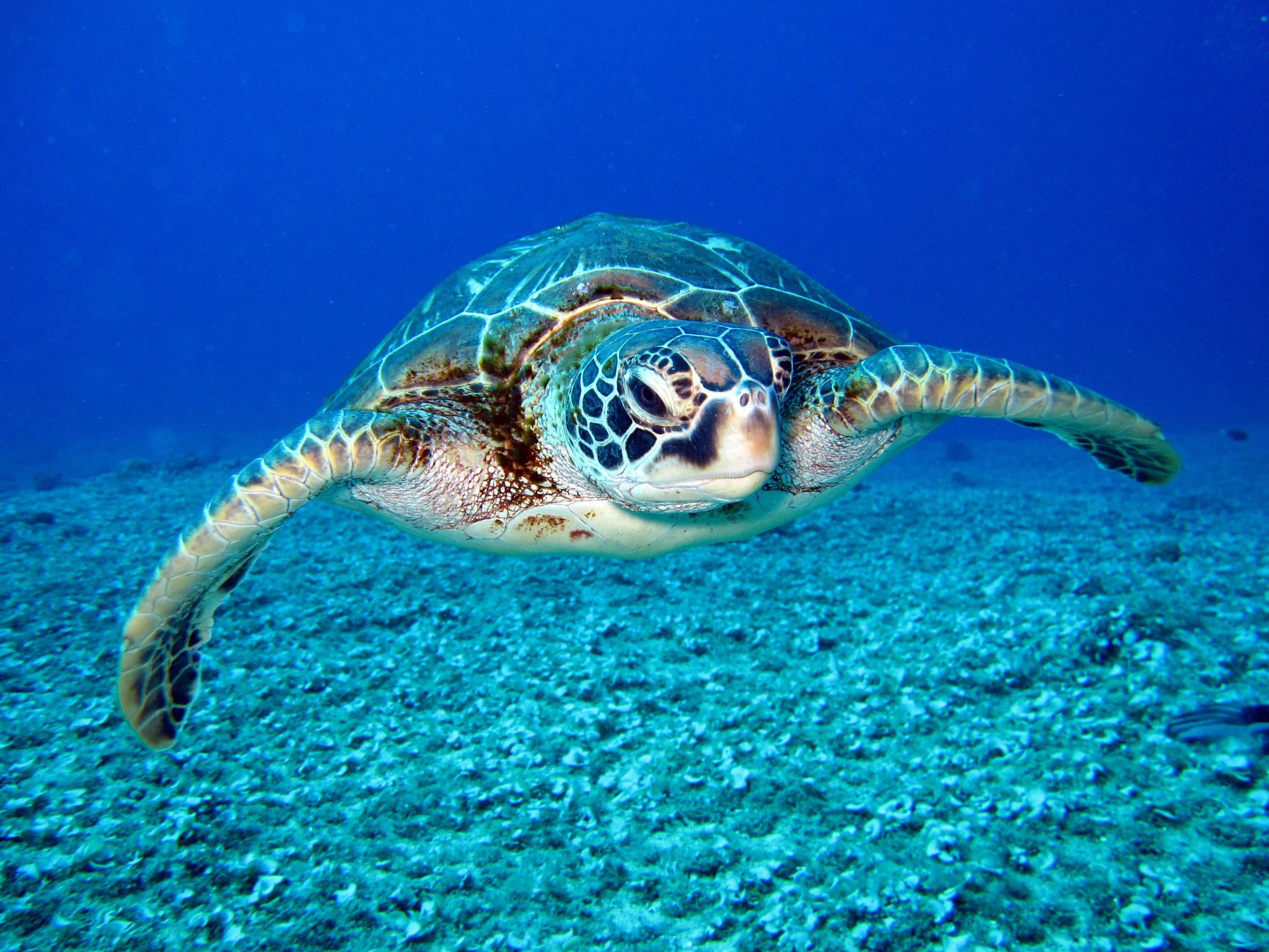 photo-of-hawksbill-sea-turtle-1618606